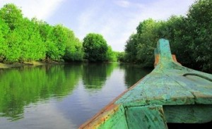 hutan mangrove muara gembong